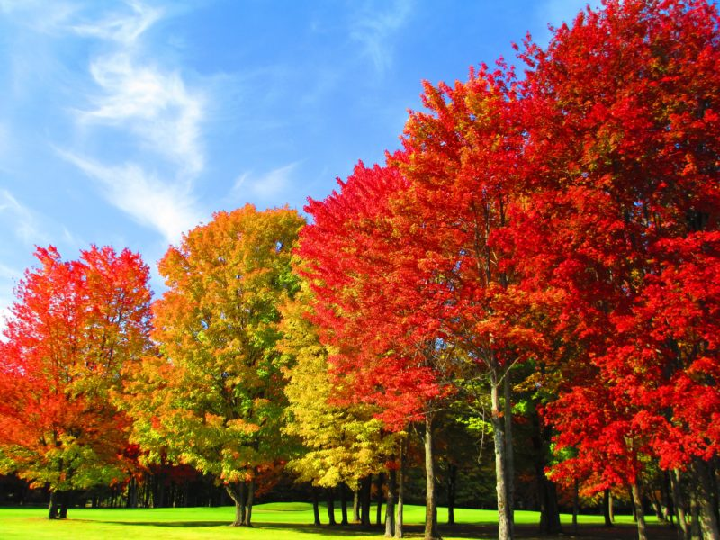 Michigan Fall Golf Tour